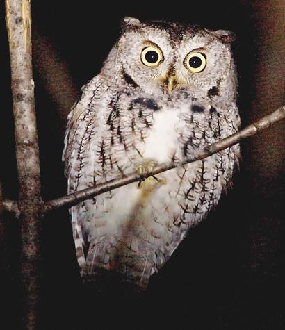 Image of: Facts You Can Learn About Amazing Local Nocturnal Animals At Annual Owl Prowl Near Exeter On Saturday November Ausable Bayfield Conservation Authority Owl Prowl On November