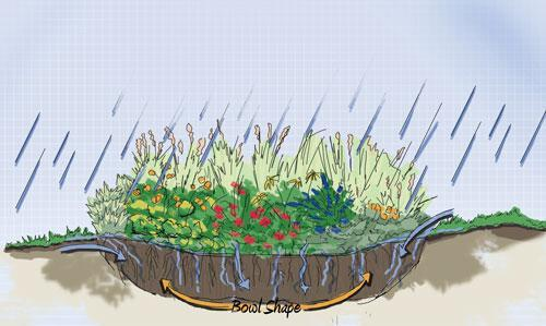 Plant a rain garden for water quality and to reduce flooding